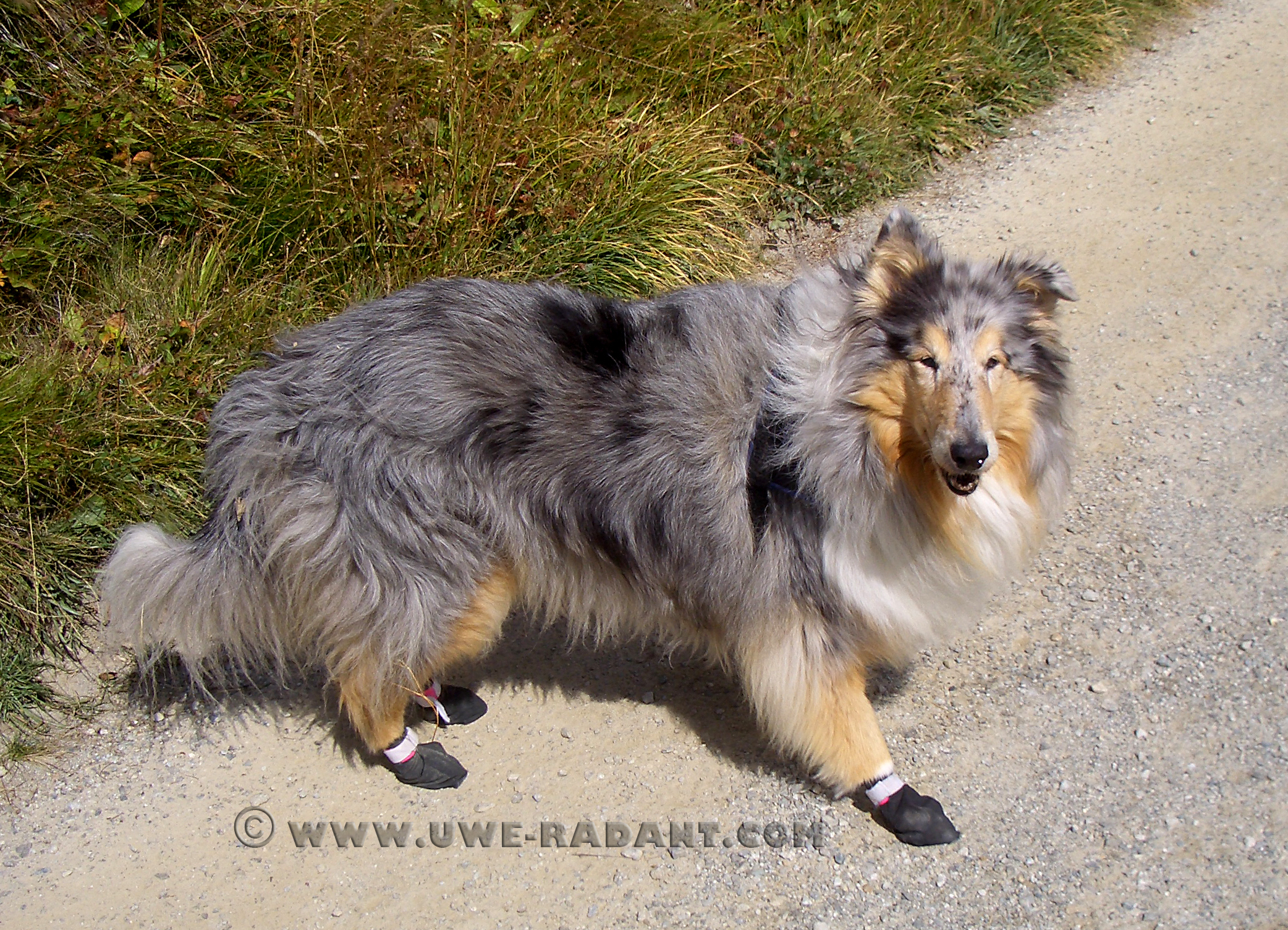 Booties - Weltmeisters Dogfood/Dogsport