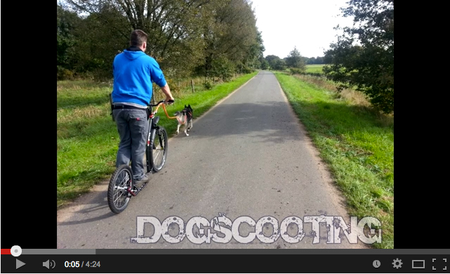 DogScooting mit Blue Eye